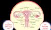 Mất cân bằng nội tiết tố nữ gây ra hậu quả nghiêm trọng