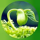 100% đậu nành chuẩn hóa không biến đổi Gen