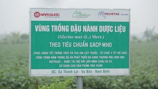 Vùng dược liệu dây thìa canh theo tiêu chuẩn GACP-WHO của Nam Dược