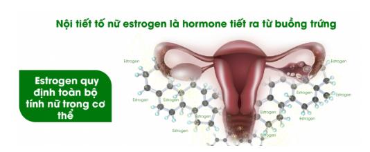 Nội tiết tố nữ estrogen là hormone tiết ra từ buồng trứng