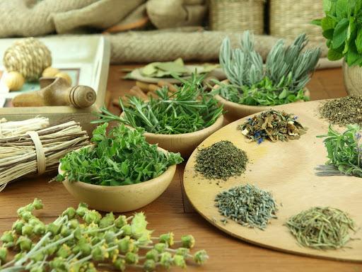 """Những bài thuốc quý từ cây đương quy"""" rất tốt cho sức khỏe."""