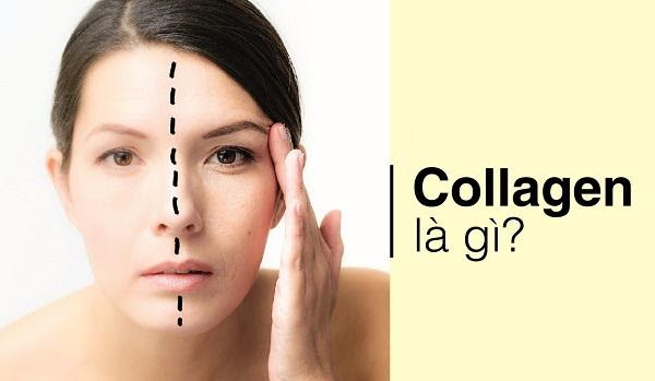 collagen-la-gi