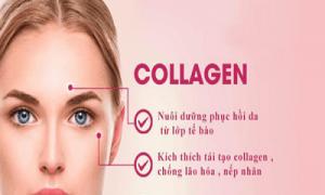 kham-pha-tac-dung-cua-collagen-ma-ban-chua-biet